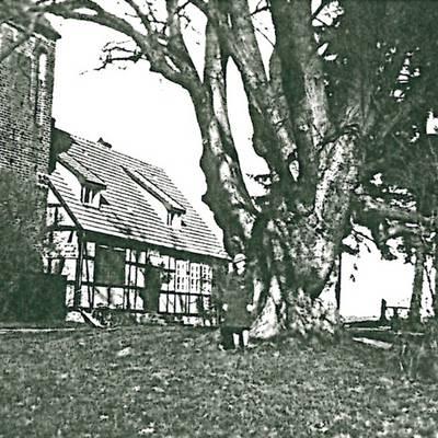 Königinnen Luisen Linde 1940 © Stadt Bismark